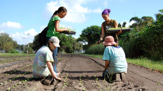 planting-in-the-field