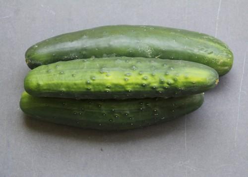 SFC_cucumber