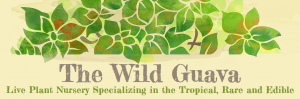 The Wild Guava Logo