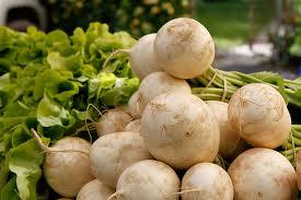 Hakurei-Turnip