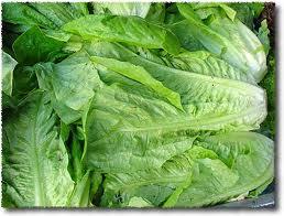 Romaine-Lettuce-2