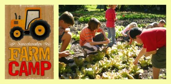 Farm Camp Banner 2