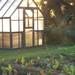 Oct 2012 small greenhouse with light
