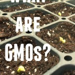 What are GMOs