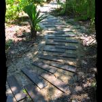 Native Plant Trail in Progress