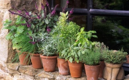 herbs-in-pots-growing-herbs-in-pots-sarahs-blog-about-gardening-pictures