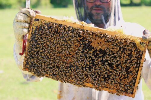 queen and colony beekeeper holding colony